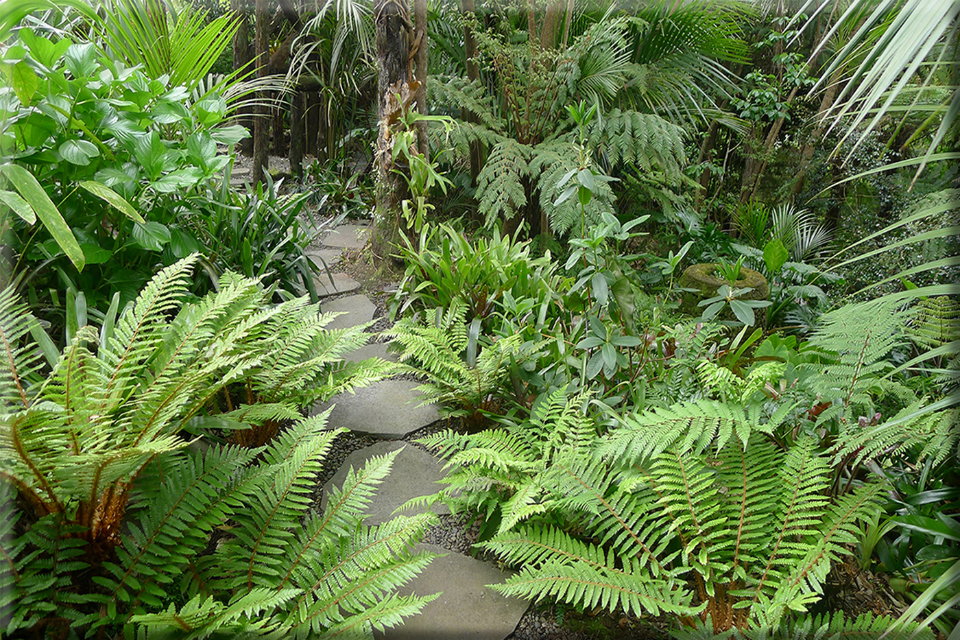 Titirangi garden photos lanzscapes for New zealand garden designs ideas